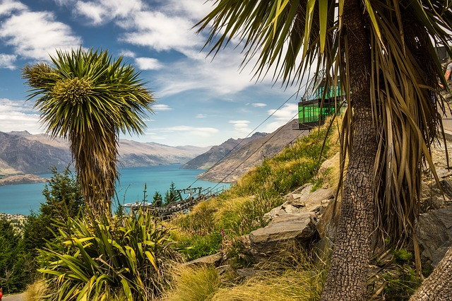 Cabbage Trees New Zealand