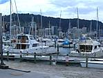 wellington_harbour_2.jpg