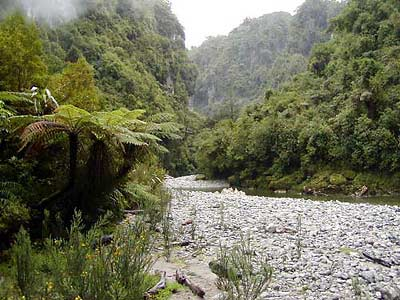 Inland Pack Track Paparoa National Park